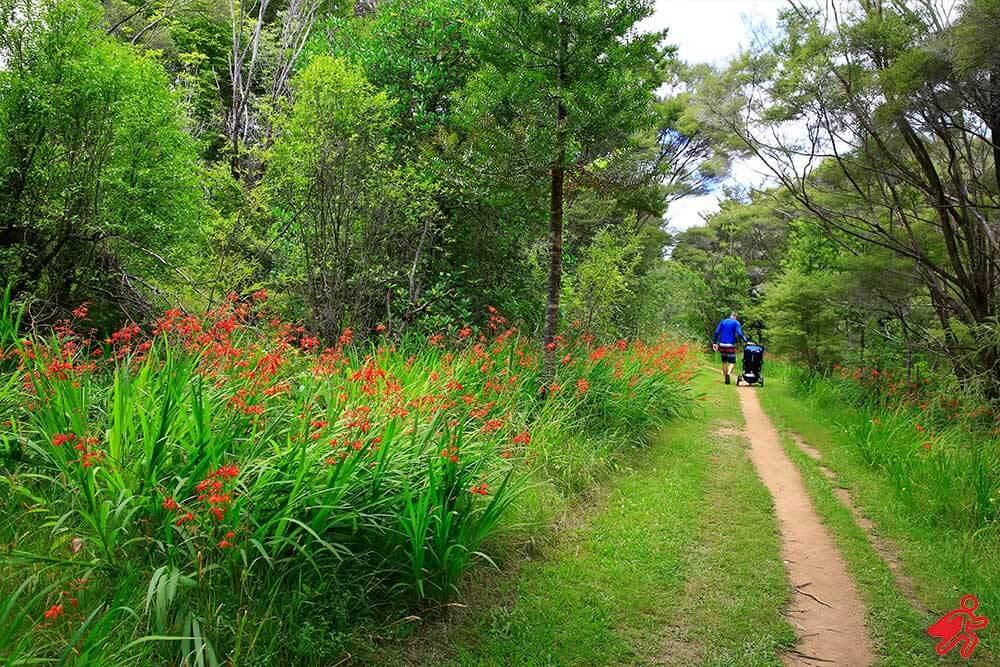 Walking Tracks New Zealand